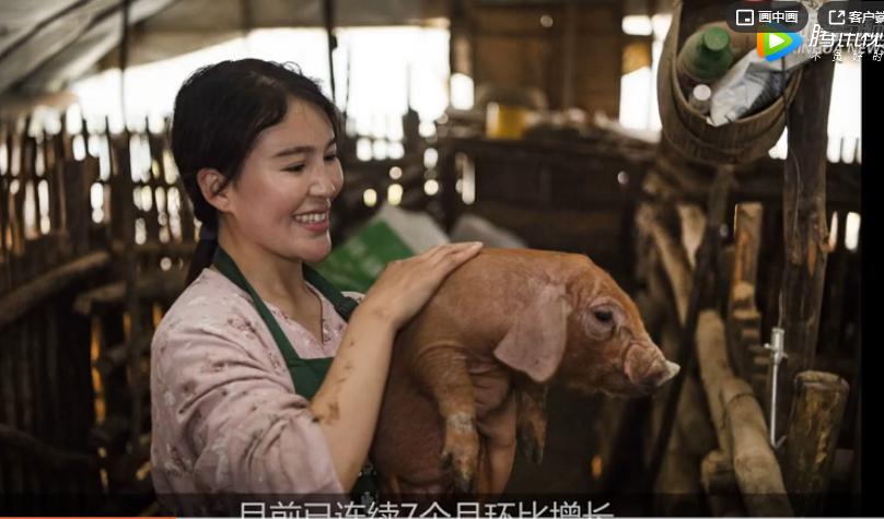 农业农村部:推动生猪生产加快恢复