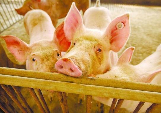 特朗普下令一个月后 泰森食品再关猪肉厂 美国食品供应链会断裂吗?