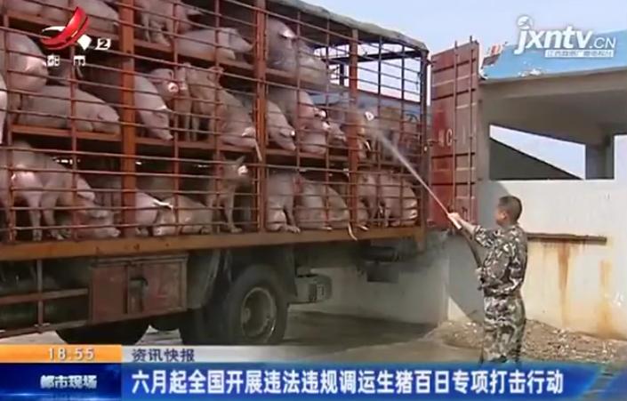 六月起全国开展违法违规调运生猪百日专项打击行动