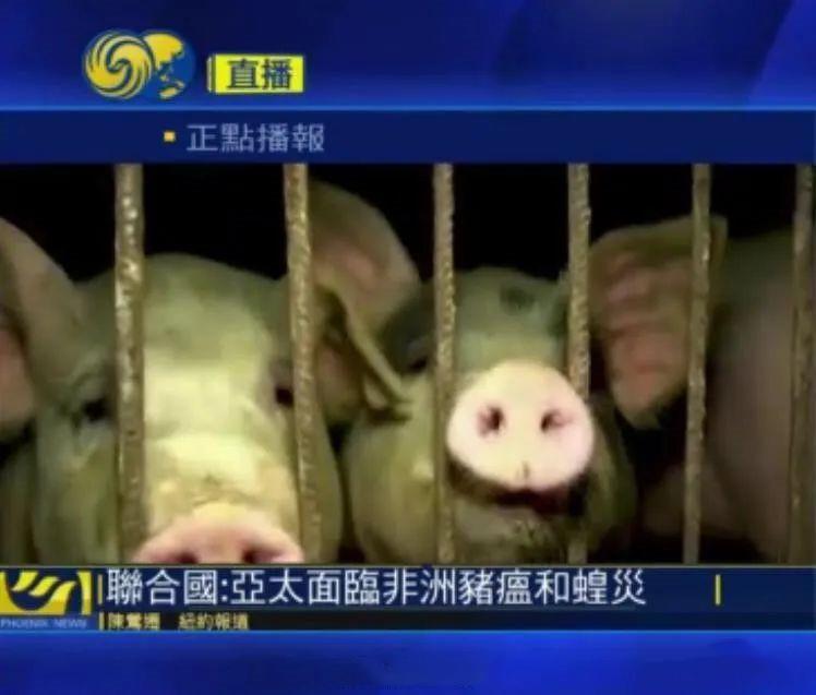 联合国:亚太面临非洲猪瘟和蝗灾