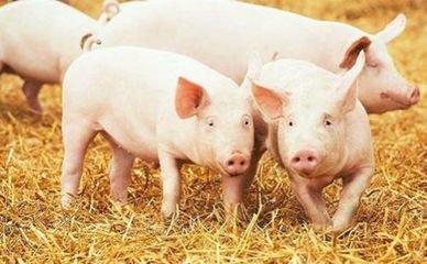 温氏投8亿元建生猪产业园——第四代现代化示范场