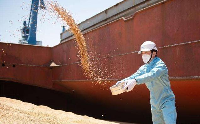 美国大豆仍正常进口,并未被停止,呼吁同时也需提升自身大豆质量