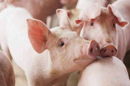黑龙江省严防非洲猪瘟推动生猪产能恢复