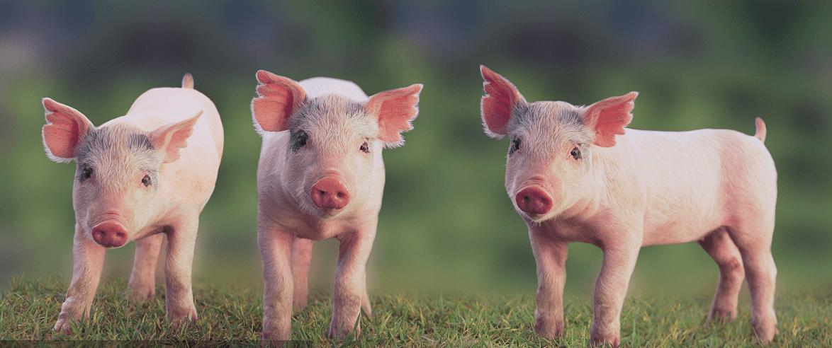 吉林:农发行通榆县支行投放扶贫贷款支持生猪企业复工复产
