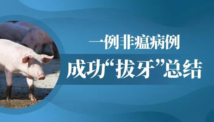 """章红兵:一例非瘟病例成功""""拔牙""""总结"""