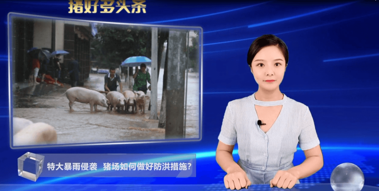 暴雨来袭,猪场应如何应对?洪水过后又如何降低猪场损失?