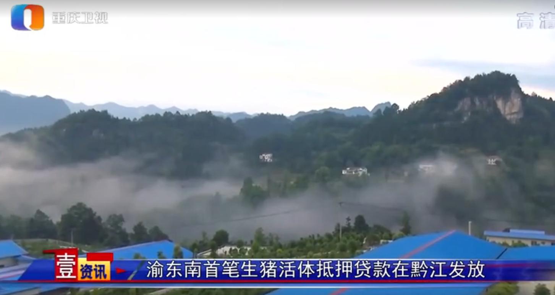 渝东南首笔生猪活体抵押贷款在黔江发放,贷款规模为3千万元