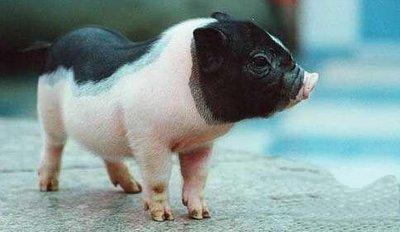 农发行黑龙江省分行:发挥政策性金融作用 大力支持生猪全产业链发展