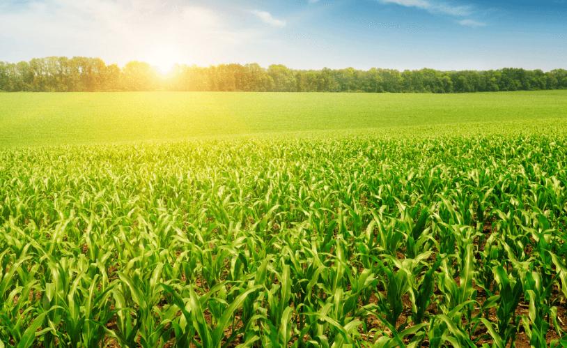 2020年6月中国农产品供需形势分析——玉米原料消耗,大豆供给充裕