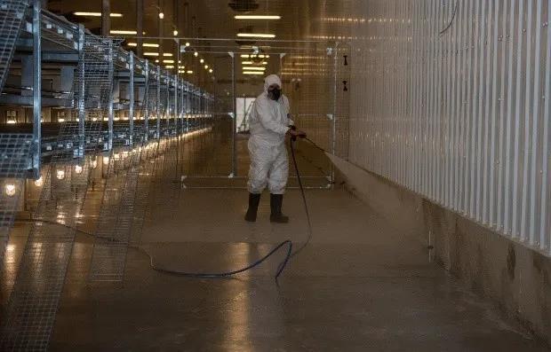 为什么泡沫清洗剂在猪场生物安全体系中如此重要?