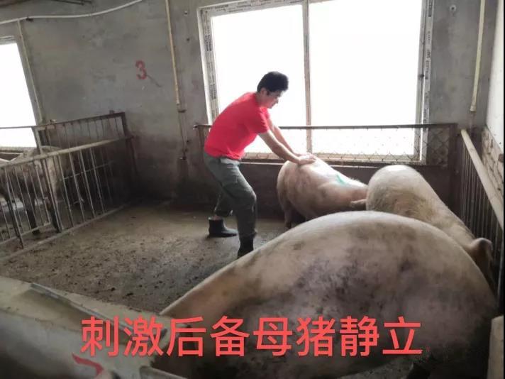 朱先利:猪场指标提升对经济效益影响有多大
