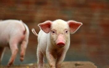 甘肃甘谷:召开唐人神集团50万头生猪绿色养殖项目考察对接会