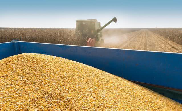 中国将发放500万吨玉米进口配额!大量美玉米涌入!6月饲料需求提振有限