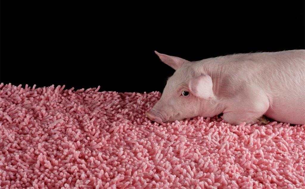 重磅:猪市震荡,巨头逆势扩张——看好后市会反弹!