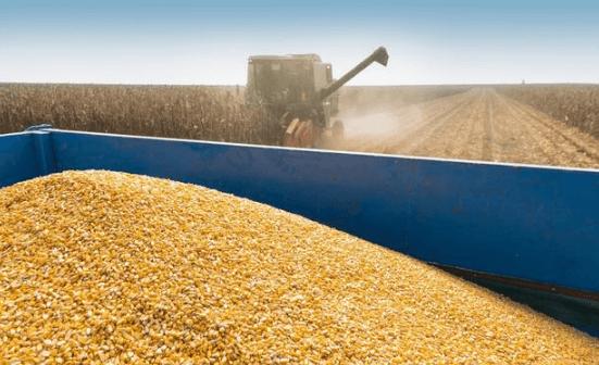 """玉米价格全线上涨,但是距离""""堰塞湖泄流""""越来越近了"""