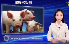 猪价进入下跌趋势, 短期内猪价还会涨吗?3个重要消息告诉你走势!