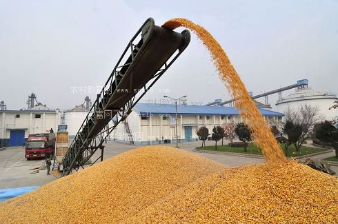 玉米价格冲高,茂名饲料率先涨价75-100元/吨!新一轮涨价潮要来了