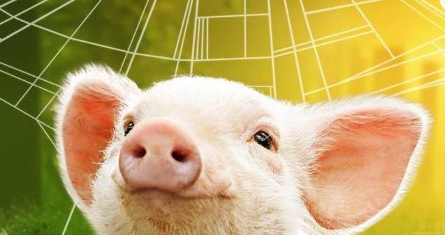 上半年猪价肉价皆高位 上下游利润却大相径庭
