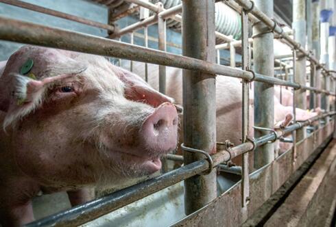 宁夏:中宁县30万头生猪养殖产业园项目开工建设