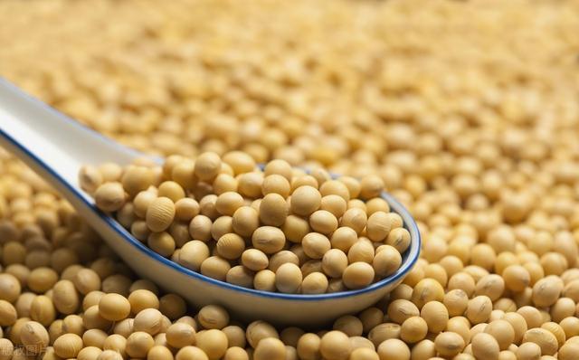 大豆拍卖热情高,涨幅达近8年新高,进口需求大,未来行情咋走?
