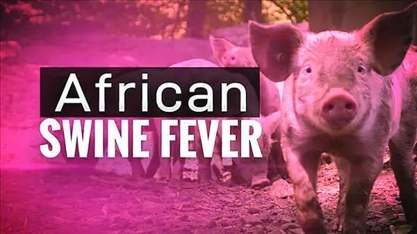 系统回顾:全球非洲猪瘟净化历史