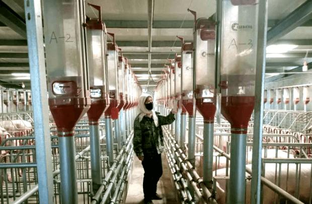 """甘肃金塔:""""智慧养殖""""为生猪产业注入新动能"""
