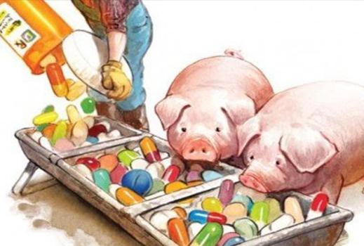 饲料全面禁抗猪肉价格会更贵?农业农村部:猪肉均价比节前涨0.9%!