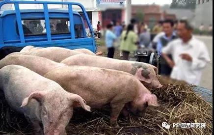 外购后备母猪信息不全