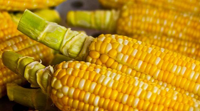 玉米上涨到顶了?部分企业价格回调