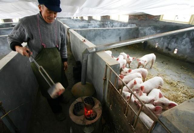 两大生猪养殖巨头齐开启定增 加码主业并引入战投