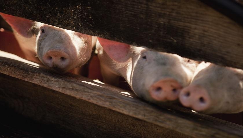 2020年第26周瘦肉型白条猪肉出厂价格监测周报