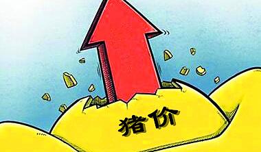 山东禹城:上半年生猪养殖成本、收益双增