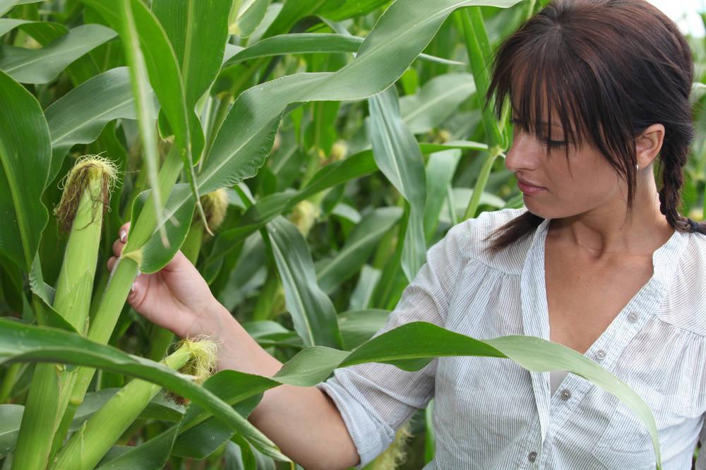 7月2日全国玉米价格行情,高位持稳运行,均价上涨迅速!