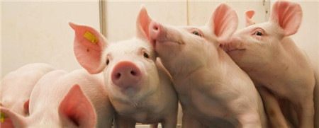 安徽:合肥市生猪生产企稳回升 5月份183家猪场存栏环比正增长