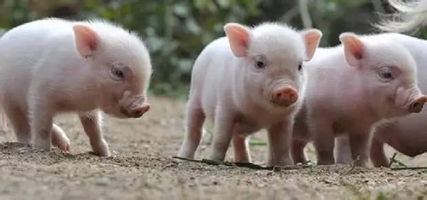 7月5日全国土杂猪生猪价格行情涨跌表,有跌有涨,整体价格继续冲高!