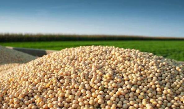 巴西对华大豆出口创新高,或超越美国成世界第一大豆生产国