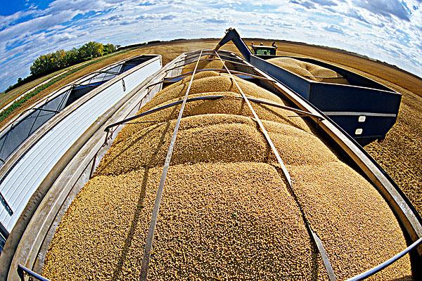 7月7日全国豆粕价格行情,豆粕市场疯涨,行情强势上行!