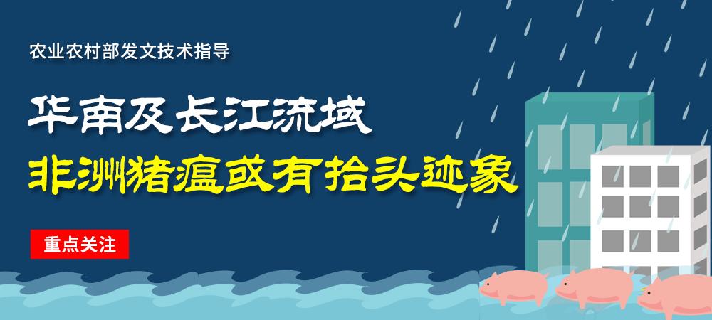 重点关注!华南及长江流域非洲猪瘟或有抬头迹象?官方发文技术指导!