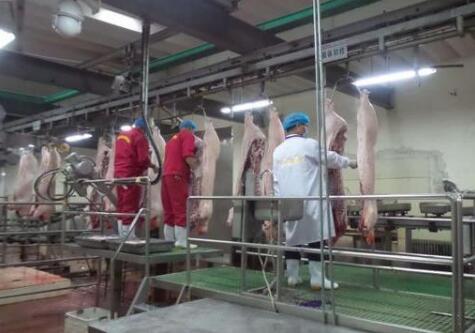 最新统计调查显示:青海生猪产能稳步恢复!