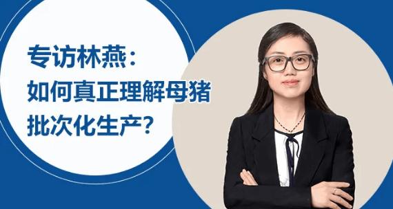 专访林燕:如何真正理解母猪批次化生产?