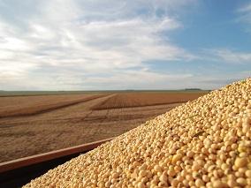 云晨期货:豆粕支撑较强 上方空间看预期实现情况