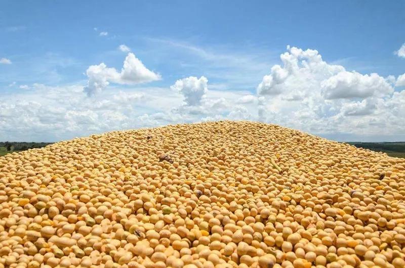 中国饲料需求大增,大豆压榨量预计突破9000万吨
