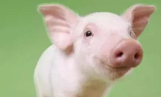 巴西要求中国取消2家猪肉厂进口禁令!