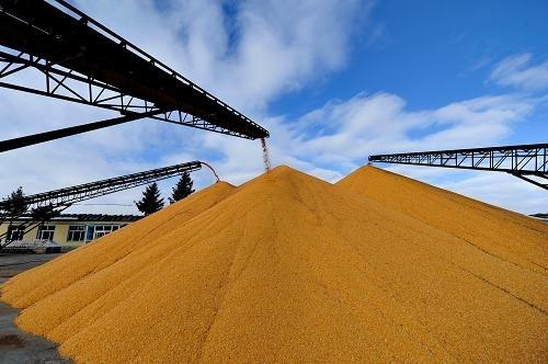 """玉米""""四个逻辑""""告诉你,2020年下半年大涨无悬念,种玉米的赚了"""