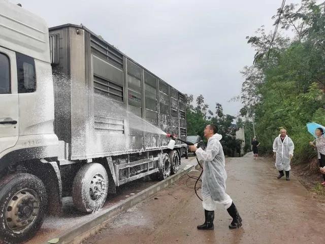 这个养猪大县如何恢复生猪生产!
