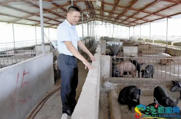 三亚:致富带头人苏江宏 养猪致富不忘带乡亲