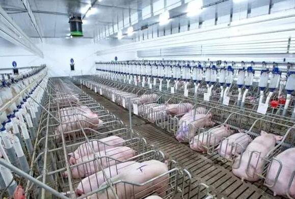 辽宁:上半年生猪存栏超千万头 同比增长15.8%