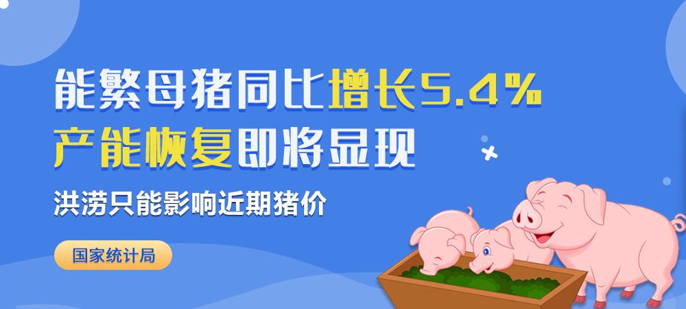 国家统计局:能繁母猪同比增长5.4%,洪涝只能影响近期猪价,产能恢复即将显现