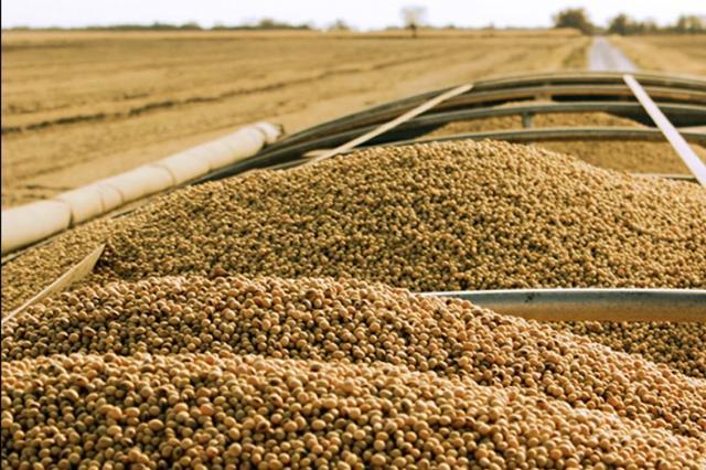 38.9万吨进口美豆来搅局,是国内其需求量大?还是其榨利更丰厚?