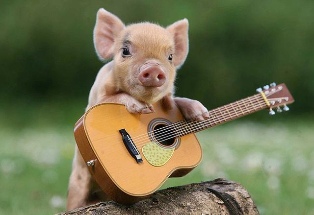 7月17日全国20公斤仔猪价格表,出现小幅的回调,但整体继续高企!